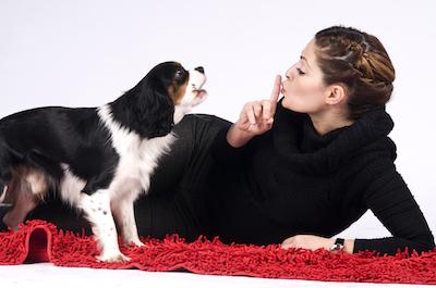 dog-wont-stop-barking