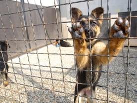 pet-shelters-in-san-antonio