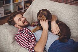 Pet-Friendly-Apartment-SA.jpg