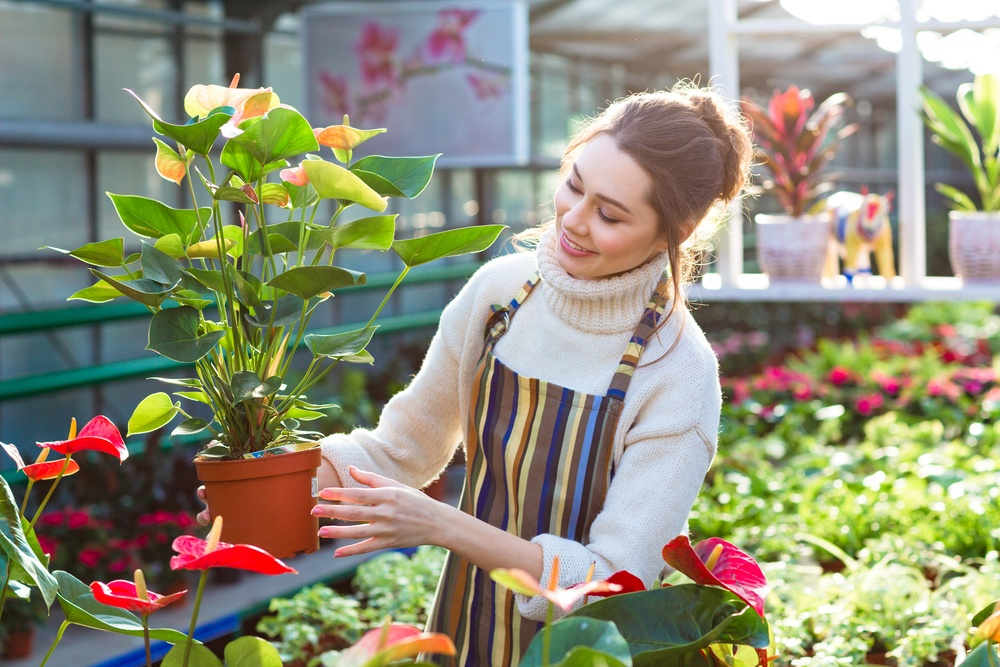 Lovely happy young woman gardener choosing flower pot with anthuriums in garden center.jpeg