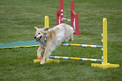 Exercise_Dogs
