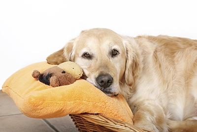 Pet_Beds