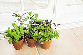 indoor-gardening-for-apartment-homes