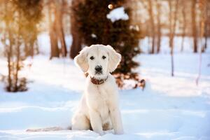 9-cold-weather-games-and-activities-for-you-and-your-dog.jpg