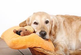 Adopting-Shelter-Pet.jpg