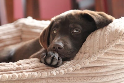 Choose the Perfect Dog Bed