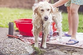 Summer_Pet_Care.jpg