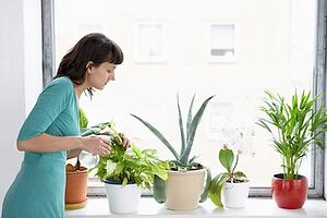 Tips for Keeping Houseplants Healthy