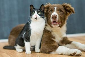 Tips to Choose Between Cat and Dog