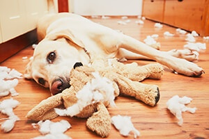 Tips for Taming Unruly Dogs