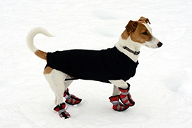 Winter-pet-tips-Main.jpg