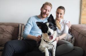 8 essential tips to protect pets in your apartment