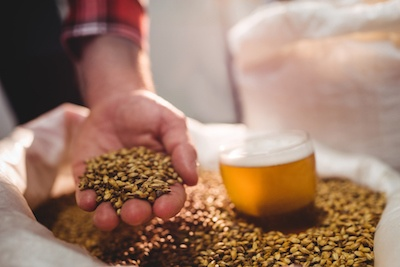 Bradenton and Sarasota Local Breweries