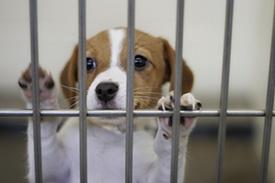 Adopt-a-Pet-Chicagoland.jpg