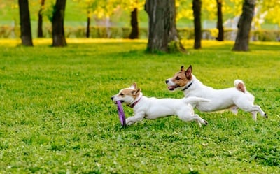 Treat Your Pet to a Fun Outing at 5 Delightful Dog Parks Around Chicagoland