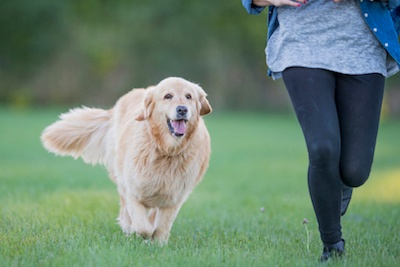 Spend Quality Time with Your Pet at 5 Fabulous Dog Parks in the Twin Cities