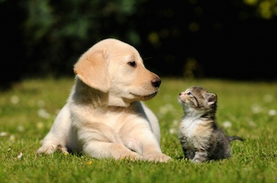 A Helping Paw: 4 Great Pet Sitting Services in Oklahoma City