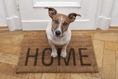 Apartment-Dog-Etiquette-Tips.jpg